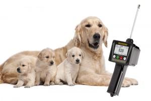 Dispositivo para criadores de perros que tienen problemas con la reproducción